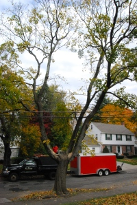 Ken's tree2