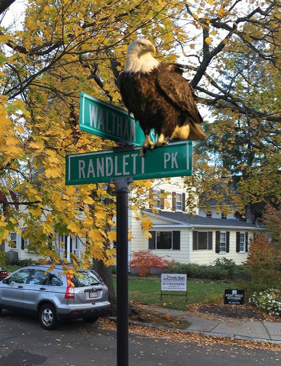 Randlett eagle